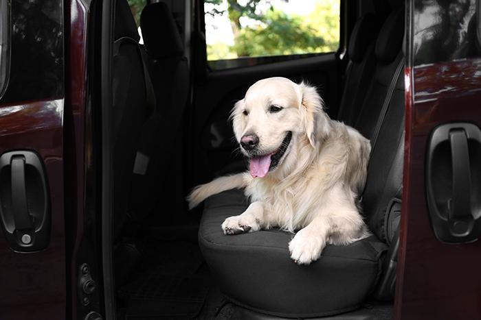 Car Organization Hacks Dog Seat Cover
