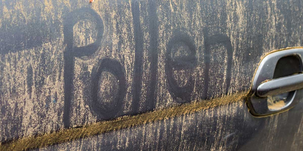 Pollen on a black car.